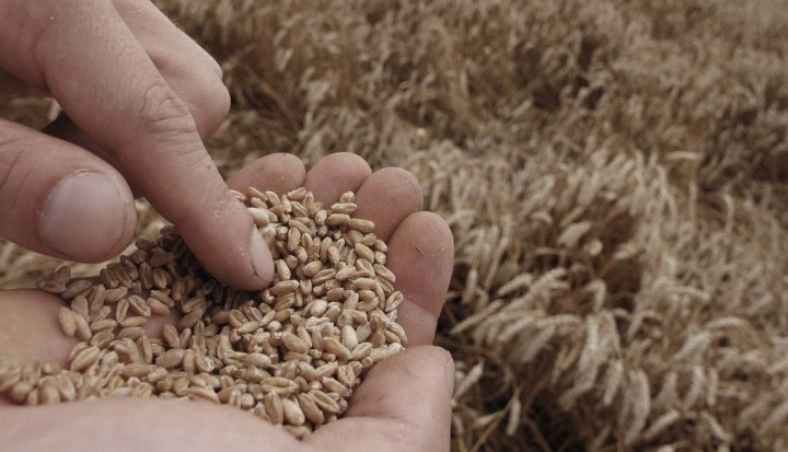 Hvad er din fremstillingspris på korn? - Østdansk Landboforening