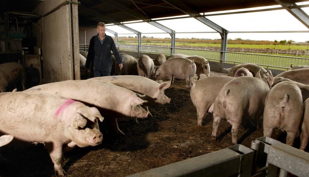 Pulje: Søg 40 % i tilskud til miljøteknologi (svin) - Østdansk Landboforening